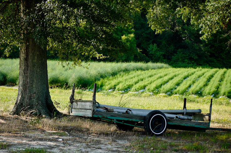 Trailer.  Lyon Family Farms, Creedmoor, N.C.