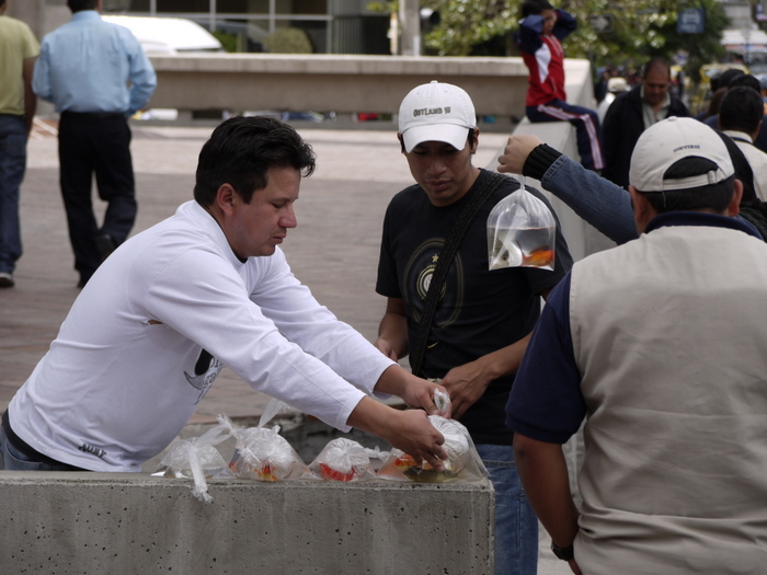 Selling fish on the street.