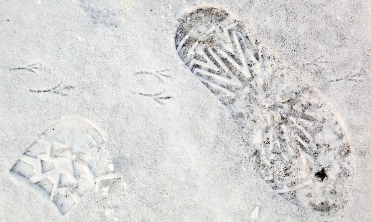 30 Days - Day 14 - Tracks in Snow