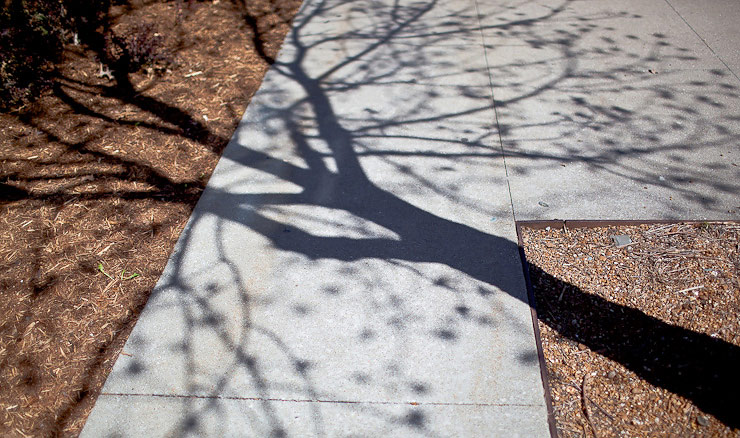 Shadows on the sidewalk