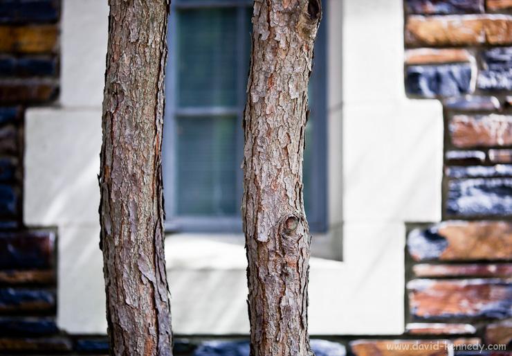 Tree trunks and Bricks