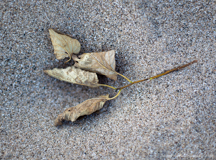 Fallen leaves on the beach