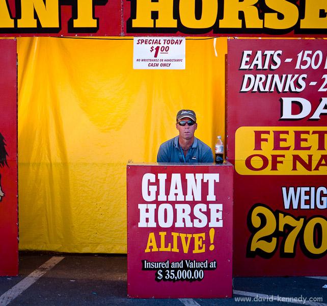 Giant Horse Alive