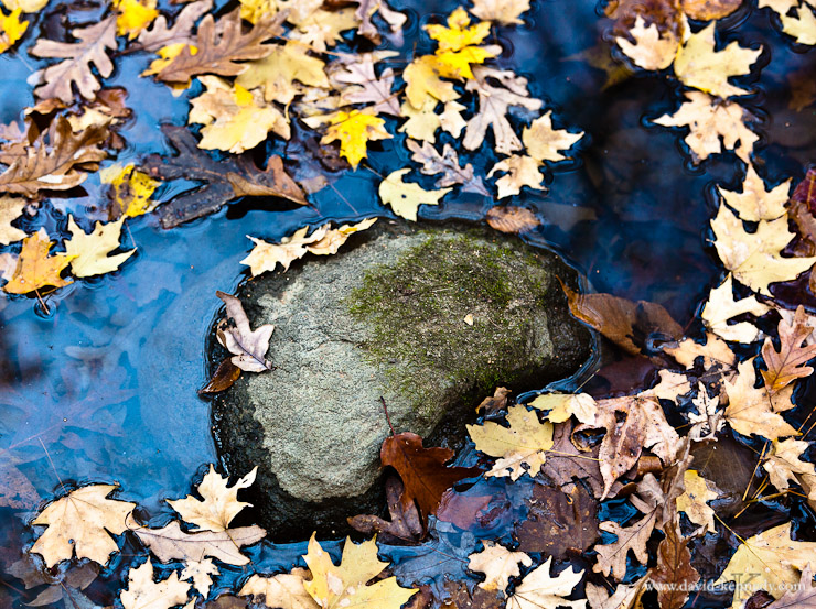 Scattered leaves floating in the water