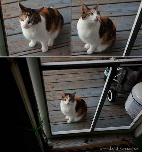 Catface Triptych