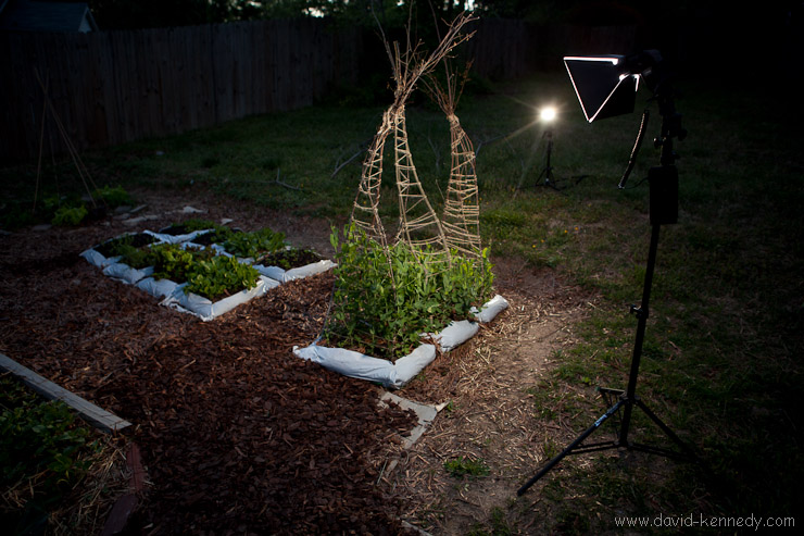 Lighting the garden