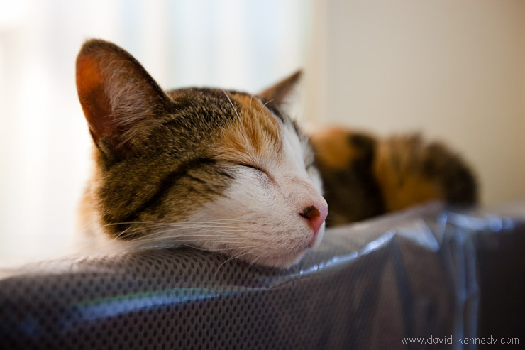Catface sleeps on top of a box of foam core and rests her chin on the bulletin board stacked out in the living room.