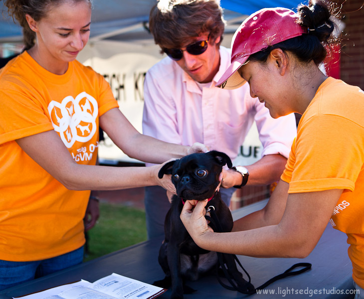 (L-R) Nicole Schnell, Mason Savage, and Christine Park prepare to implant a microchip in Tonia Lutzewitz's dog, Amino, at the free microchip clinic offered by the Raleigh chapter of the American Kennel Club at the 20th annual NCSU Dog Olympics held at the College of Veterinary Medicine on September 10, 2011 in Raleigh, NC.