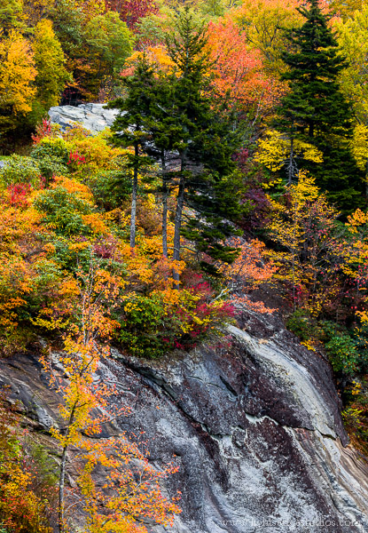 Fall color along the Blue Ridge Highway, North Carolina