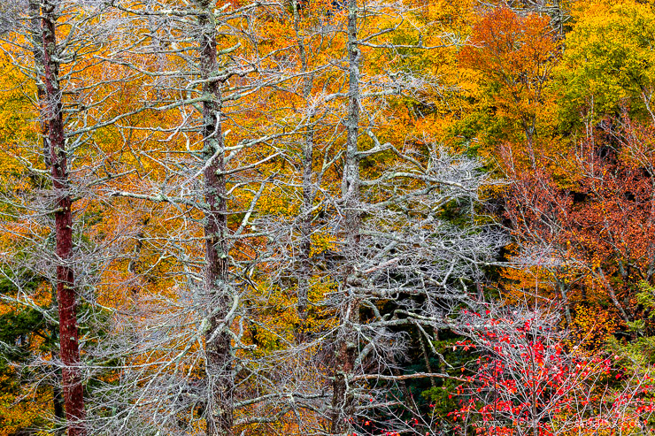 Fall Color and Bare Branches